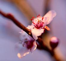 Superstiţii şi obiceiuri în luna APRILIE (Prier)