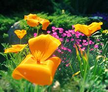 Superstiţii şi obiceiuri în luna MAI (Florar)