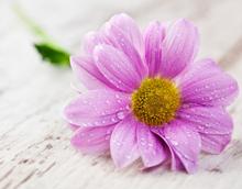Superstiţii despre plante şi flori